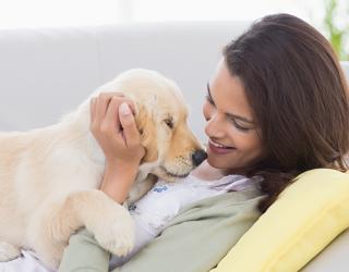 Ci amano di più i cani o i gatti?