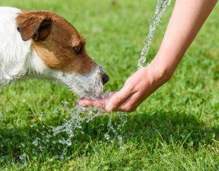 cane, colpo calore, strategie anti caldo