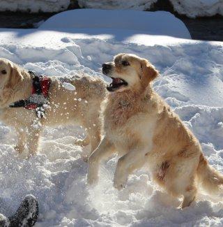 cane-neve-montagna-passeggiata-inverno