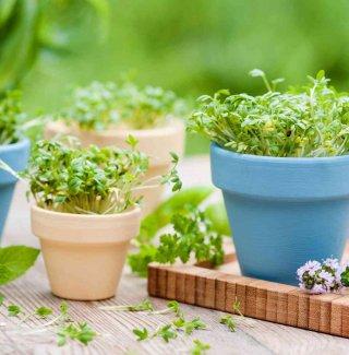 Curare le piante donnad for Curare le piante