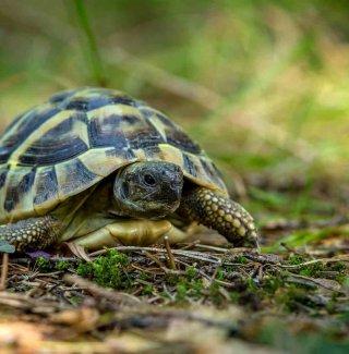 tartaruga in casa