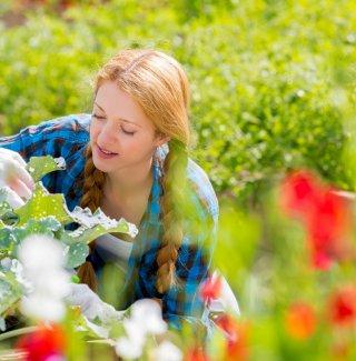 Come coltivare le piante e i fiori giardino fai da te for Cose da giardinaggio
