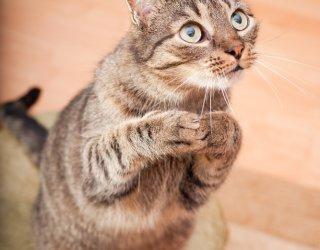 Il linguaggio dei gatti donnad for Il linguaggio dei gatti