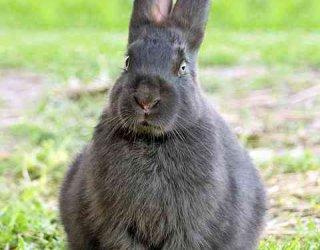 Come costruire una gabbia per conigli donnad for Costruire casa risparmiando