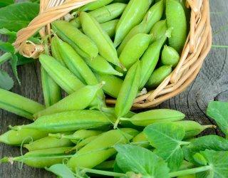 Come coltivare i piselli donnad for Piantare piselli