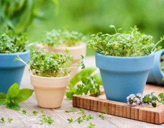 Come coltivare piante aromatiche in vaso donnad for Erbe aromatiche in vaso