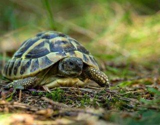 una tartaruga in casa donnad