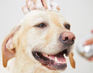 Ogni quanto fare il bagno al cane donnad - Come fare il bagno al cane ...