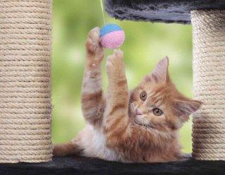 Come non far scappare il gatto dal giardino - Allontanare i gatti dal giardino ...