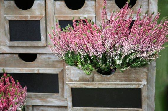 Piante e fiori invernali donnad for Piante invernali