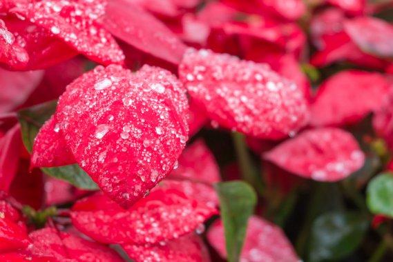 fiorire d'inverno - photo #17