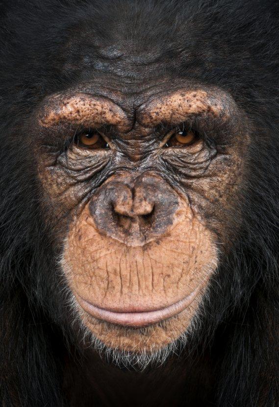 Che Cosa Significa Sognare Una Scimmia Donnad