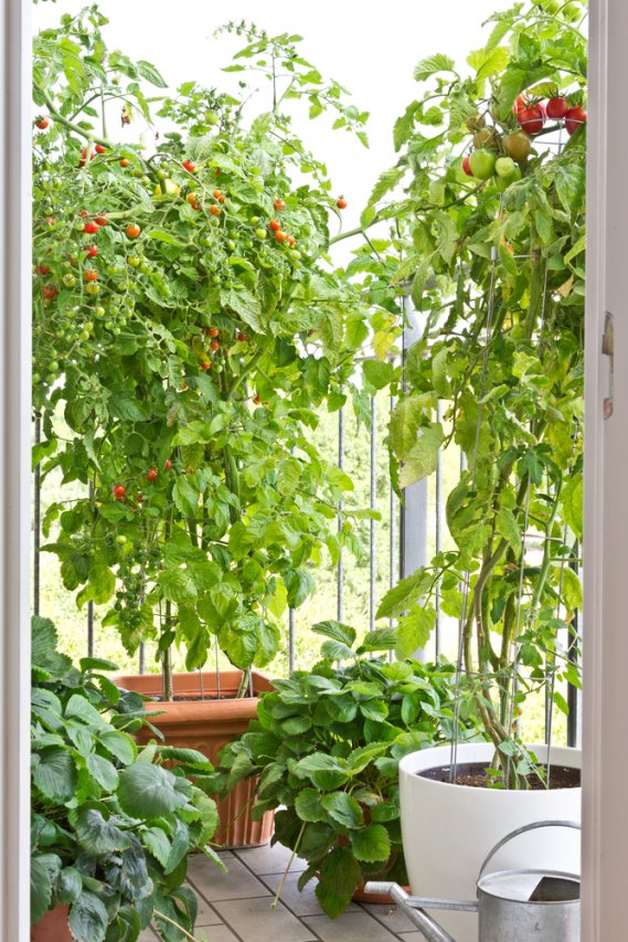 Come creare un orto giardino donnad for Creare un giardino