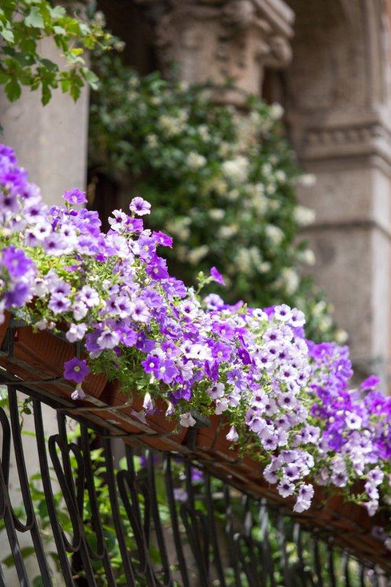 Come Pulire La Casa In Estate : Cura del giardino no balcone donnad
