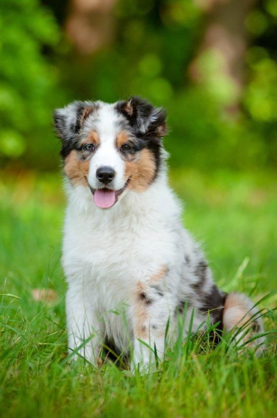 Cani da casa idee creative di interni e mobili for Piani casa cane trotto