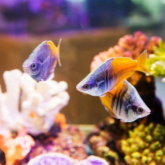 Un acquario in casa donnad - Acquario x casa ...