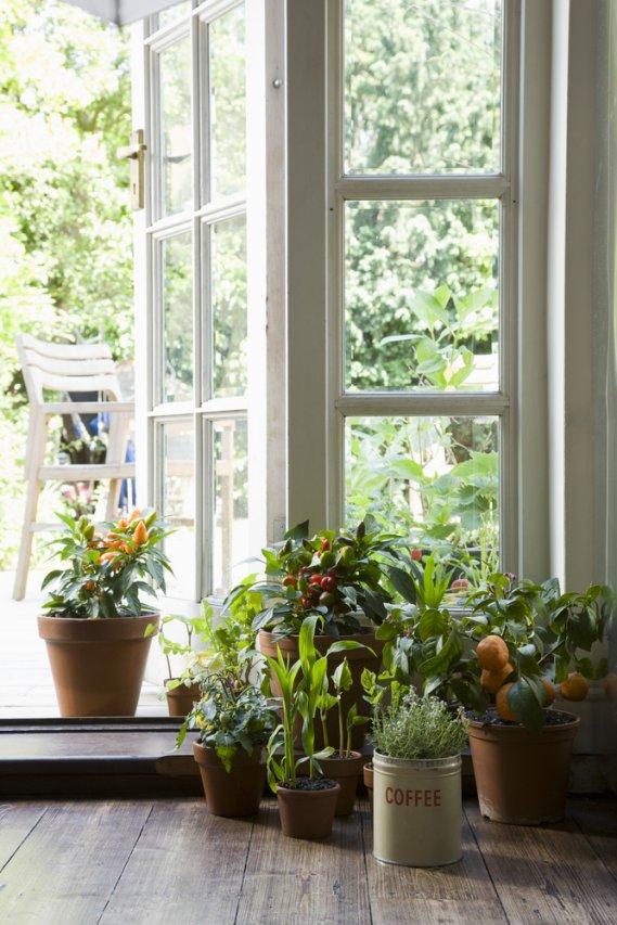 Una serra in casa donnad - Costruire una serra in casa ...