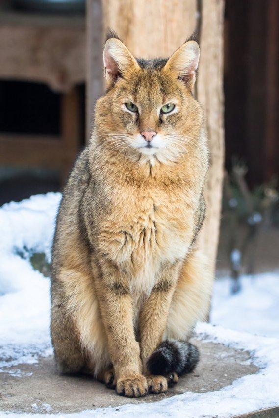 Puma Cat Promo