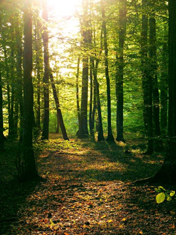 Boschi e foreste nei sogni donnad for Cabina innevata nei boschi