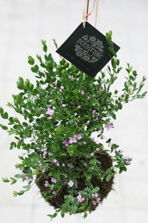 Crea il tuo string garden donnad for Crea il tuo software di casa
