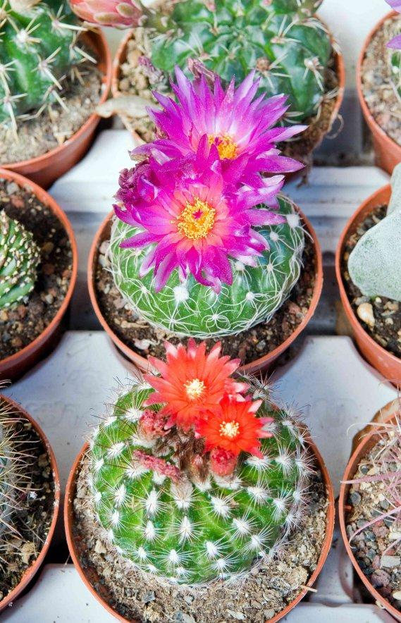 Piante grasse nomi e tipi donnad for Foto piante grasse particolari