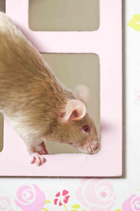 Come eliminare i topi donnad - Come uccidere i topi in casa ...