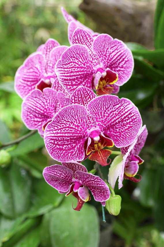 E Coltivare Le Orchidee In Casa