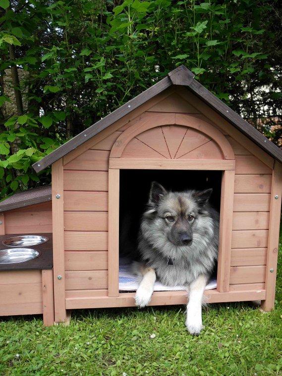 Come costruire una cuccia per cani donnad for Come fare per costruire una casa