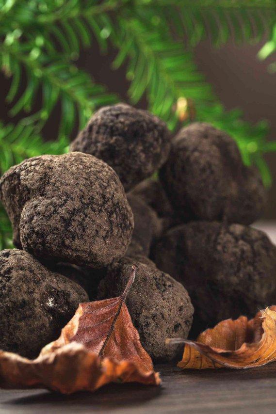 Coltivare i tartufi a casa ecco come donnad - Come coltivare il basilico in casa ...