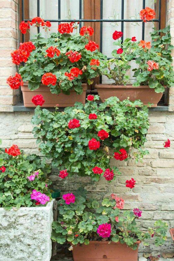 Cosa piantare a marzo sul balcone ecco quali fiori donnad - Abbellito con decorazioni ...