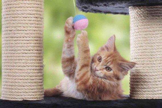 Come costruire giochi per gatti donnad - Cucina casalinga per gatti ...
