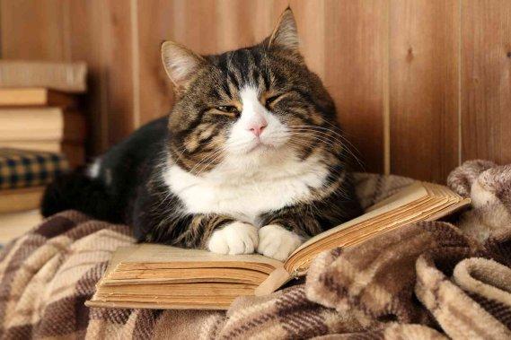 Come allevare ed educare un cucciolo di gatto donnad - Cucina casalinga per gatti ...
