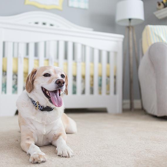 Come tenere pulita la propria casa in presenza di animali e neonati donnad - Come tenere pulita la casa ...
