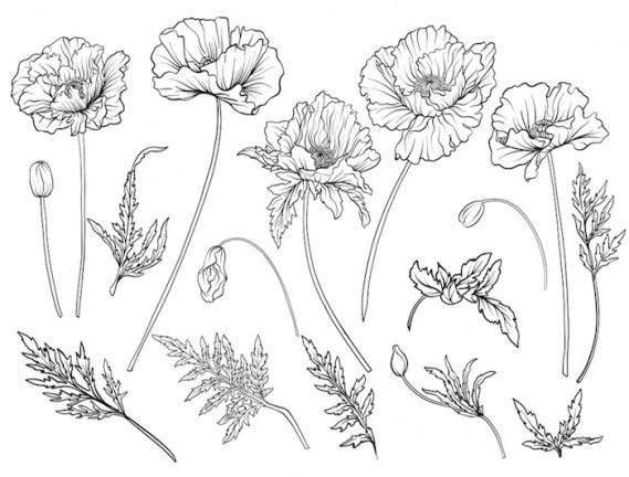 Come Disegnare Un Fiore Facilmente I Video Tutorial Donnad