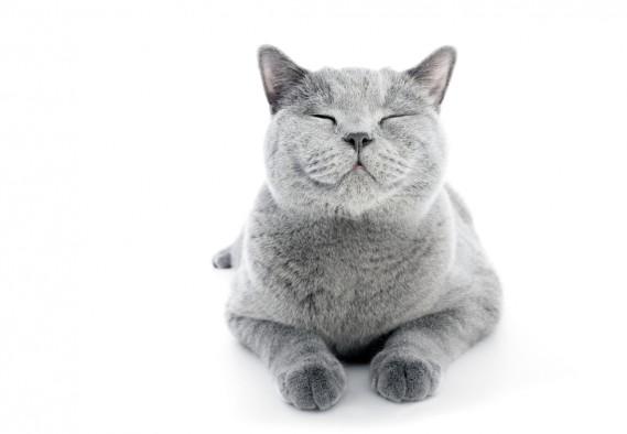 I gatti dei cartoni animati: 6 produzioni da vedere donnad