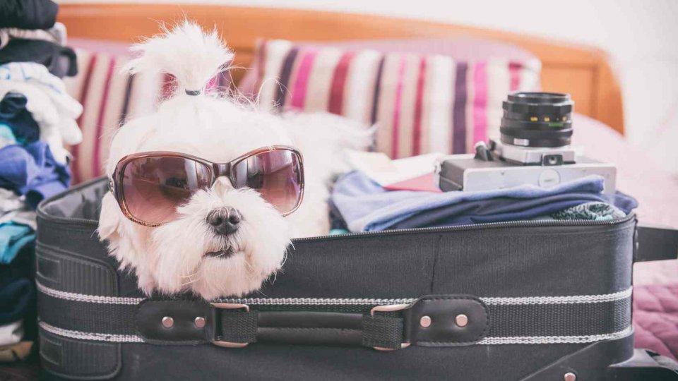 Cosa mettere in valigia per il cane ecco cosa portare - Cosa portare in vacanza per i bambini ...