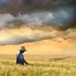 lavoratore della terra, terreno coltivato, prodotti della terra, campagna