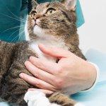 frattura animale domestico rimedi primo soccorso vetrinario