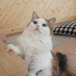 gatto educazione ricompensa obbedire