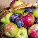 mela proprietà benefici salute consigli utilizzo