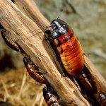 sognare scarafaggi significato