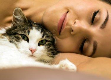 cani gatti casa igiene animali quattrozampe amici veterinario cura pulizia padrone cucciolo cuccia allergia profilassi