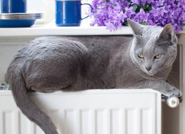 termosifoni riscaldamento manutenzione sfiato calcare termosifoni impianto caldaia