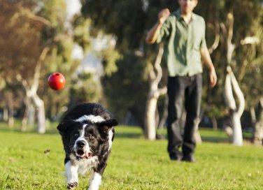 cane cucciolo gioco educazione famiglia