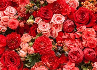 fiore, pianta, giardino, mazzo di fiori, fioritura, boccioli, rose