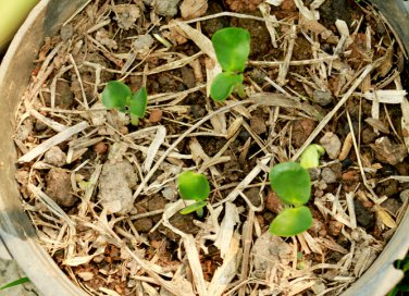 letargo-piante-risveglio