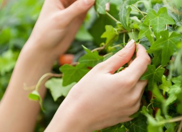 Cure d'autunno per le tue piante in casa