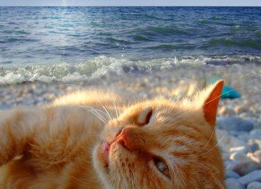 cane gatto animali vacanza preparativi regole esigenze
