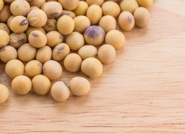soia alimento legume proteine benefici salute consigli