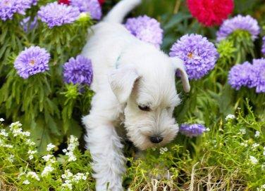 cane giardino piante nocive tossiche pericolose fiori primavera